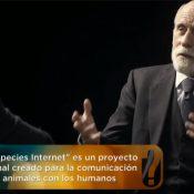 Internet para una comunicación entre especies animales, te sorprende?